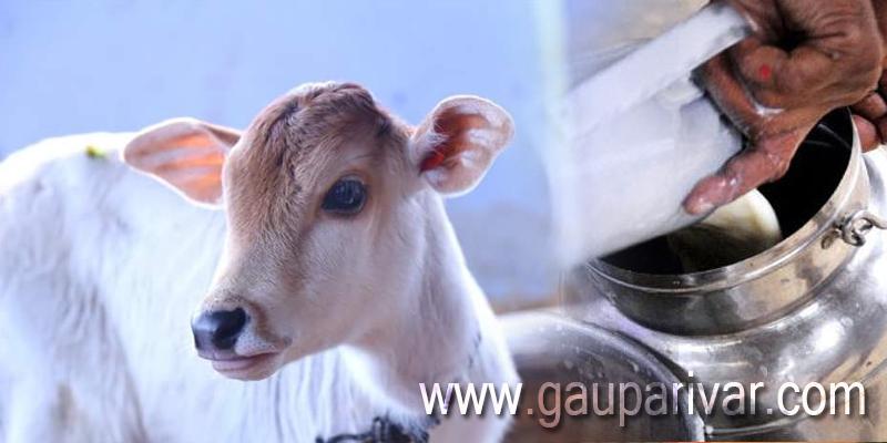 करोड़पति बनना है तो गाय पालन करें ..(भारत के संदर्भ में)