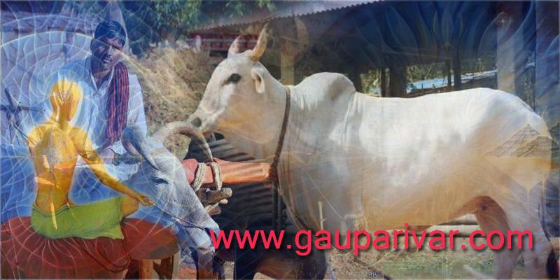 गाय का आध्यात्मिक महत्वः
