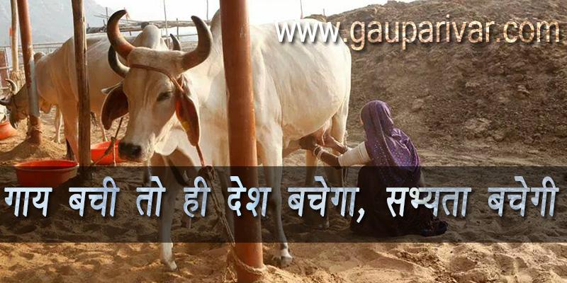 ~ गाय बची तो ही देश बचेगा, सभ्यता बचेगी ~