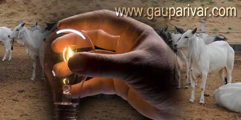 400 ग्राम गोमूत्र की बैटरी से 3 वाट का बल्ब 400 घंटे तक जलाया जा सकता है।