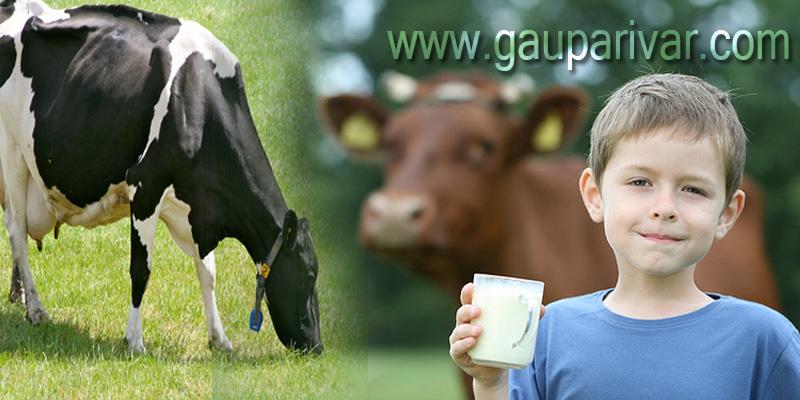 कहीं आप विदेशी जर्सी गाय का दूध तो नहीं पी रहें ??