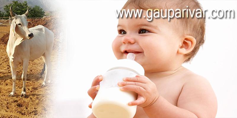 गाय के दूध में स्वर्ण तत्व होता है