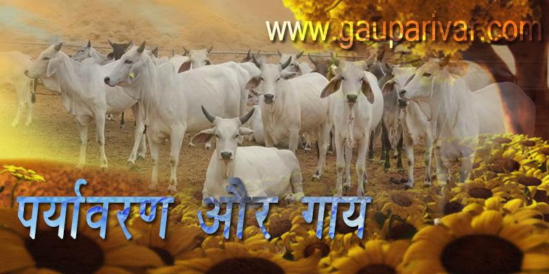 पर्यावरण और गाय