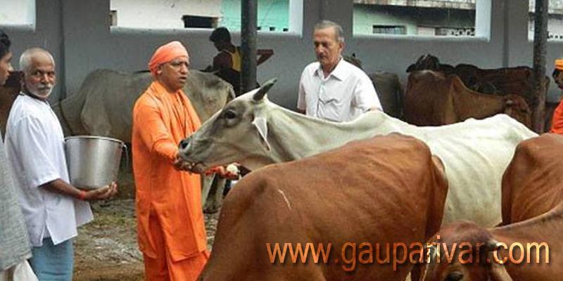 उत्तर प्रदेश: योगी सरकार राज्य के हर गांव में खोलेगी गौशाला, शुरुआत बुंदेलखंड से होगी