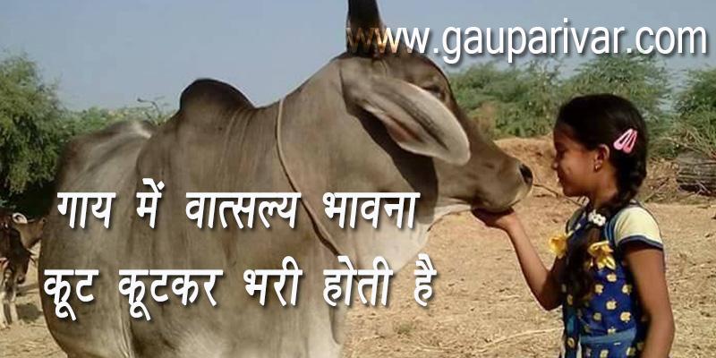 देशी गाय में वात्सल्य भावना कूट—कूटकर भरी होती है