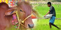 भारतीय कृषि एवं गाय