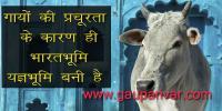 गायों की प्रचूरता के कारण ही भारतभूमि यज्ञभूमि बनी है