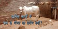 धार्मिक कार्यों में गाय के गोबर का प्रयोग क्यों?