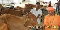 गाय प्रेमी योगी की सरकार में गायों के आएंगे अच्छे दिन ?