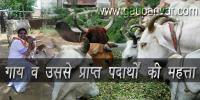 गाय व उससे प्राप्त पदार्थों की महत्ता