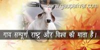 गाय सम्पूर्ण राष्ट्र और विश्व की माता है