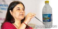 फिनाइल की जगह करें 'गौनाइल' का इस्तेमाल: मेनका गांधी