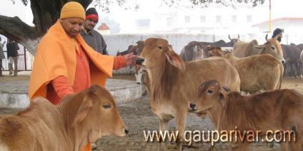 गौशाला शुरू करने पर सरकार देगी अनुदान