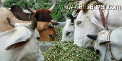 धेनु: सदनम् रचीयाम्