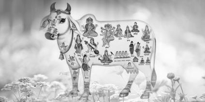 गाय का दूध अपनाएं और बनाएं अपने शरीर को रोग मुक्त