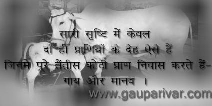 सारी सृष्टि में केवल दो ही प्राणियों के देह ऐसे हैं जिनमे पूरे तैंतीस कोटी प्राण निवास करते हैं- गाय और मानव ।