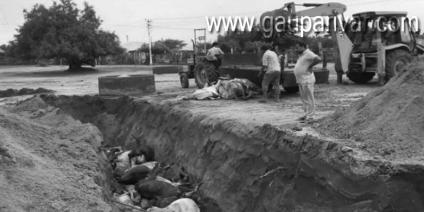 बांध का पानी घुसा पथमेड़ा गोशाला में, 536 गोवंश की मौत