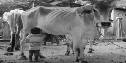 गाय , मानव , धूमिल , बचाओ